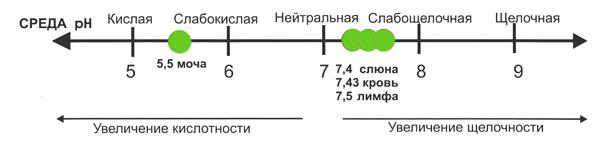 Реакция мочи (pH мочи)